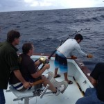islamorada deep sea shark fishing