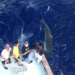 4-20-13 bnm tiger shark